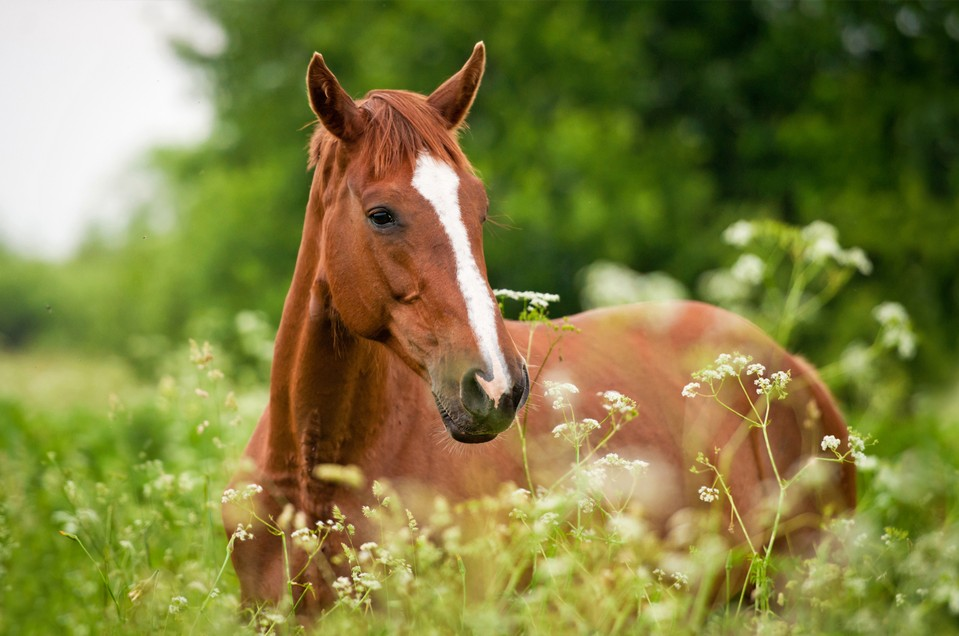 Veterinarian in Idaho Falls, ID - Equine